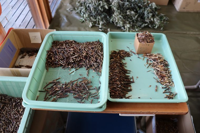 「ふくぎ茶」を作るために、枝の太さで分類されるクロモジ