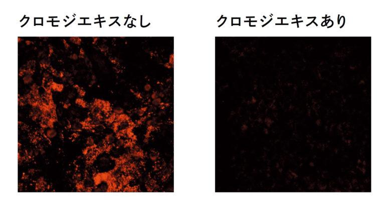 細胞表面を染色しウイルスの吸着を確認