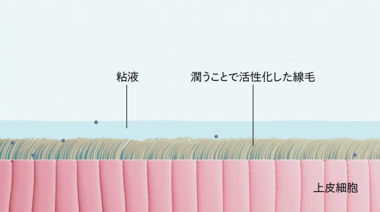 上皮細胞の線毛と粘液の働き
